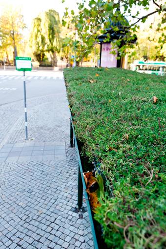 Uppsala satsar på grönskande väderskydd, men Malmö var först ut med ett sådant. Foto: JCDecaux Sverige.