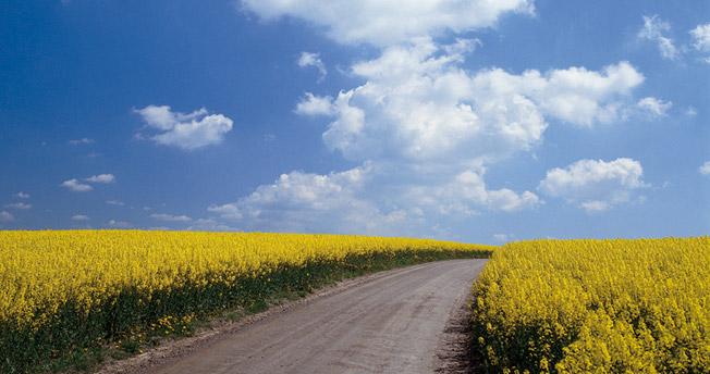 Biodrivmedel från odlade grödor ska bort, tycker EU-kommissionen. Foto: Svebio.